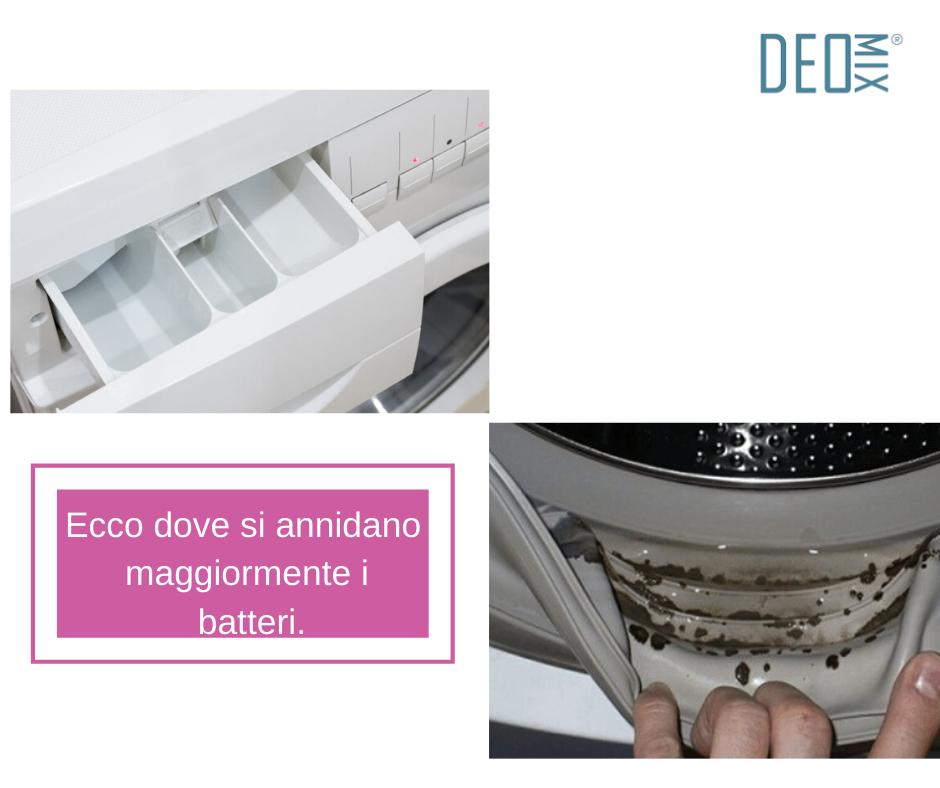 Dove si annidano i batteri nella lavatrice