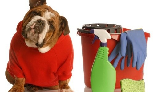 Come eliminare l'odore di cane e gatto da casa