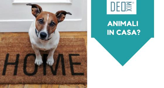 Come pulire una casa con animali. Istruzioni per l'uso