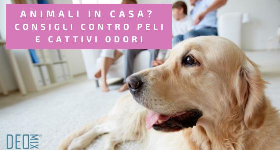 Animali in casa? Consigli contro peli e cattivi odori